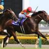 【レース結果】モーリス優勝・2番人気フィエロは4着